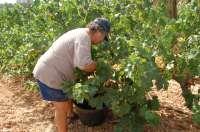 La campaña de la uva en Galicia se salda con 66 denuncias y casi 5.000 actuaciones de la Policía Autonómica