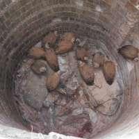 Junta rescata 12 buitres leonado atrapados en un pozo en el Parque Natural Sierra de Aracena y Picos de Aroche