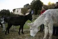 Galicia estrena jabones de leche de burra elaborados en la reserva de la Biosfera de Allariz