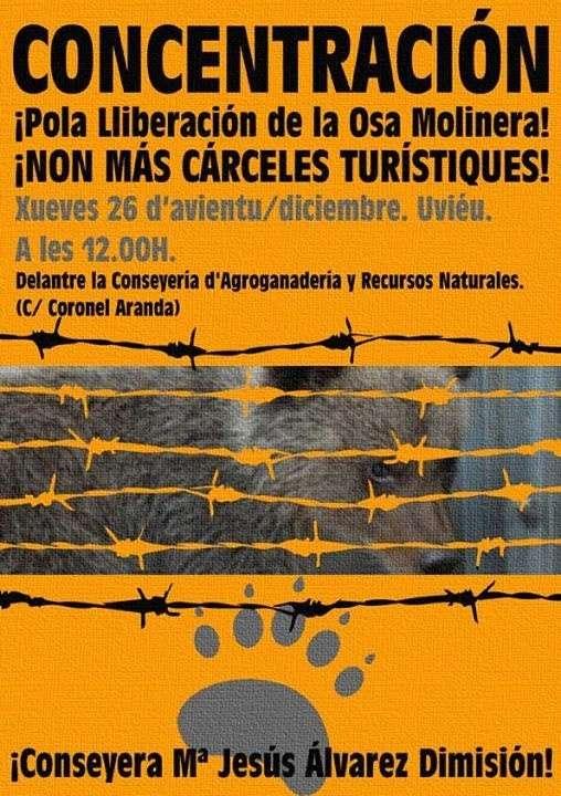La Plataforma por la libertad de la osezna 'Molinera' convoca una concentración ante Agroganadería