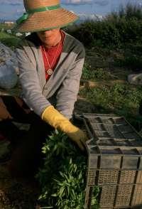 Diputación de Bizkaia abre este viernes el plazo para solicitar ayudas a las inversiones en explotaciones agrarias