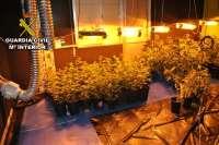 Detenido un individuo e incautadas 362 plantas de marihuana en una vivienda en Vilanova de Arousa (Pontevedra)
