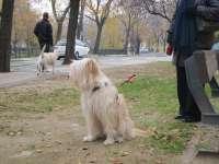 La campaña 'Adopta en Aragón Informa' anima este domingo a acoger a animales abandonados