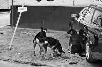Dos fotógrafos extremeños buscan financiación para exponer un trabajo sobre los perros callejeros en Sarajevo