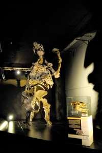 Dinópolis expone un cráneo original de un perezoso gigante