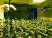 Desmantelan una plantación de marihuana en un domicilio de Sa Rapita (Campos)