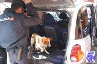 Nueve detenidos en Valladolid, seis de ellos de los Monchines, en una operación antidroga