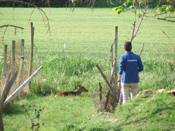 Trasladan a Aran, Andorra y Alemania animales de una antigua granja escuela de Lleida
