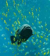 Voluntarios de Greenpeace pedirán este domingo en Santa Maria que los políticos no se olviden de los océanos