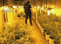 Detenidos los tres miembros de un grupo delictivo dedicado al tráfico de marihuana e intervenidas mil plantas