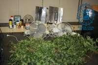 Hallan en Málaga una plantación con 45 macetas de marihuana en una caseta protegida por dos perros