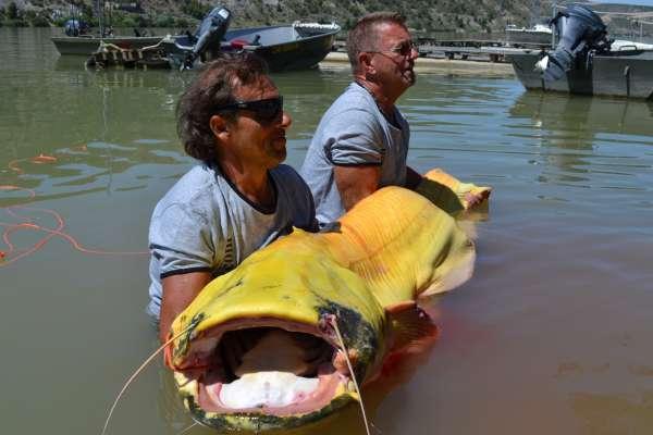 Dos pescadores austriacos capturan un siluro albino