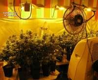 La guardia civil desmantela un laboratorio clandestino con 60 plantas de marihuana en Llanera de Ranes