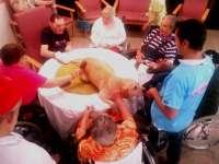 El IASS de Tenerife imparte terapias con perros para mejorar la calidad de vida de los mayores