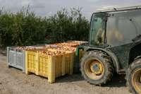 Los productores de granada mollar calculan que el 30% de las exportaciones peligran por el veto ruso