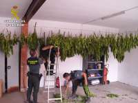 La Guardia Civil desmantela en Alfaro una plantación de Cannabis Sativa