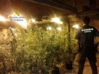 Intervenidas cerca de 200 plantas de marihuana en dos cobertizos de Lloreda de Cayón