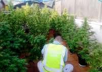 Detenido un hombre por cultivar 24 plantas de marihuana en El Vendrell