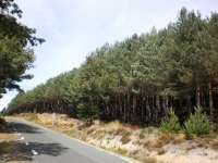 Agricultura contratará defensa de masas forestales contra la procesionaria del pino en montes de gestión pública