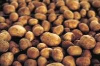 UPA-COAG repartirá el viernes en Madrid 3.000 kilos de patatas