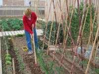 El Ayuntamiento aprueba la convocatoria de subvenciones para recuperar la huerta tradicional