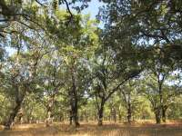 Los productores de madera dicen que el cierre de la planta de celulosa de Ence será