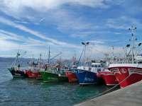 El Gobierno reabre la pesca de anchoa en el Cantábrico