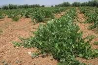 Agricultura destina 2,5 millones de euros para las ayudas a la destilación de subproductos de la vinificación