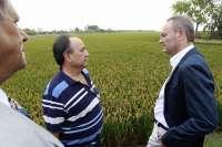 Fabra señala que los cultivadores de arroz percibirán un pago complementario de 100 euros por hectárea