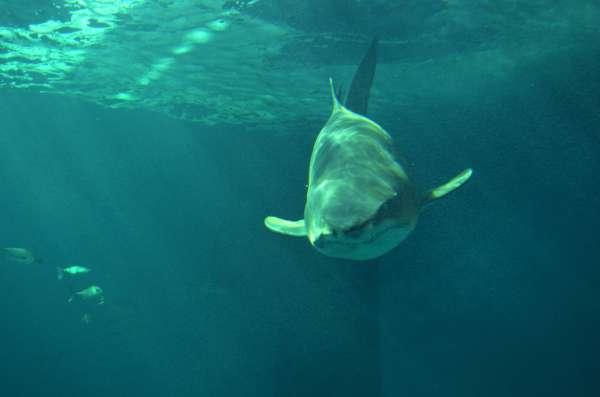 El Acuario de Sevilla abre sus puertas este martes, con las mayores instalaciones para tiburones de Europa