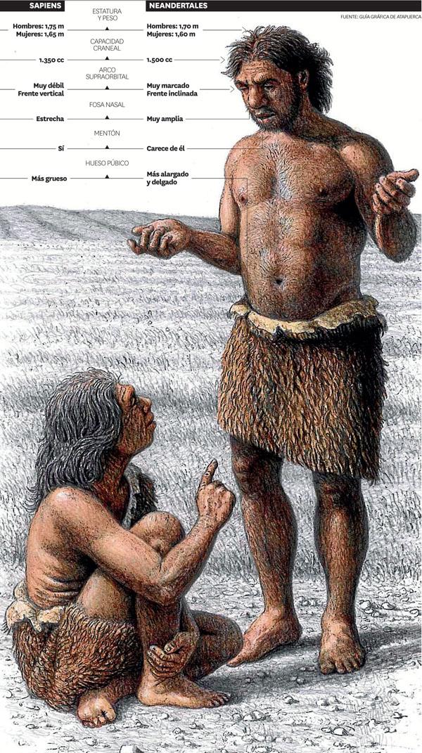 <p>Comparación sapiens-neandertal</p>