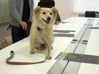 Ayuntamiento y Centro Canino de Torres concienciación sobre tenencia responsable de animales