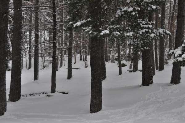 Activada la alerta naranja por viento y amarilla nieve y temperaturas bajas en la provincia de Huesca