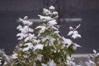 La Ibérica riojana se encuentra inmersa en una alerta por frío que continuará mañana