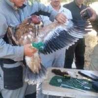 El Cuerpo de Agentes Medioambientales ultima la operación de rehabilitación de nidos de águila imperial ibérica
