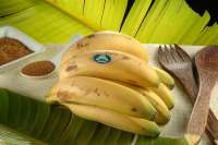 CC-NC exige nuevos fondos para subvencionar el transporte del plátano canario a la Península