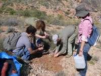 El Ministerio de Agricultura cofinancia un proyecto para evitar la extinción de la manzanilla de Escombreras