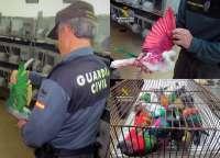 Guardia Civil esclarece la sustracción de más medio centenar de palomos deportivos, valorados en 20.000 euros