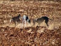 Una manifestación recorrerá este domingo la capital para protestar contra el maltrato a los perros de caza