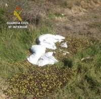 Detenidas 'in fraganti' cinco personas en Gibraleón mientras robaban más 800 kilos de aceituna