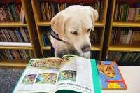 Una fundación inicia en Valencia un programa de animación lectora asistida con perros para niños con y sin discapacidad