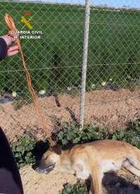 Guardia Civil imputa a dos personas por ahorcar a un perro y envenenar con cebos raticidas a un segundo
