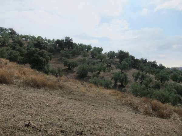 La Junta alerta sobre la importancia de realizar prácticas beneficiosas contra la erosión del suelo