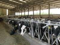 Productores de leche se manifestarán este lunes en Santiago ante la