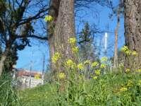 Las temperaturas primaverales y sol se mantendrán hasta el fin de semana, salvo en el suroeste peninsular, con lluvia