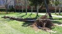 IU critica incumplimientos de FCC en la recogida de ramas y troncos en diversos puntos de la ciudad