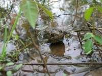 Los atropellos, principal causa de mortalidad de fauna salvaje en la Comunitat en 2014