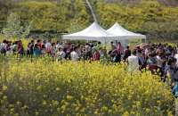 Un total de 1880 personas participan en el segundo Paseo Saludable, que ha discurrido por las Huertas de Varea