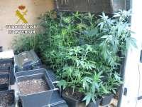 Detenidas tres personas que cultivaban hasta 32 plantas de marihuana en una casa de Arinaga (Gran Canaria)