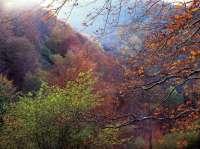 El nuevo PDR destinará el 10% de sus fondos a potenciar el sector forestal